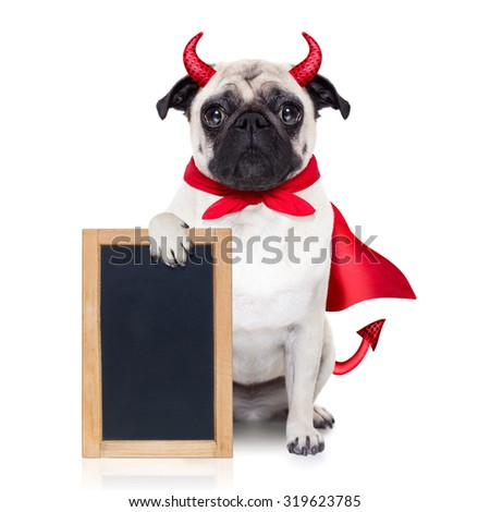 halloween devil pug dog  hiding behind white empty blank  blackboard or placard , isolated on white background - stock photo