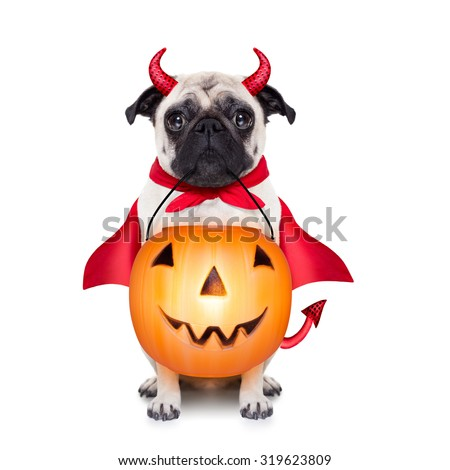 halloween devil pug dog with trick or treat bowl, isolated on white background - stock photo