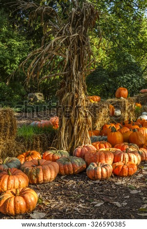 Halloween Display with a Variety of Pumpkins