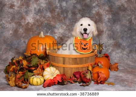 Halloween Golden Retriever Puppy - stock photo
