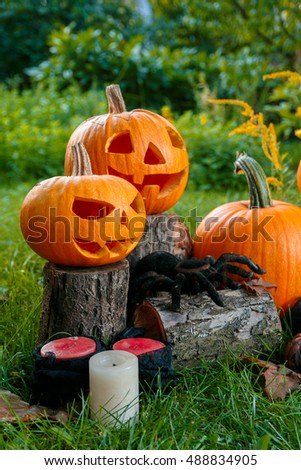 Halloween.  Jack-o-Lantern. scary pumpkin with a smile near candles and spider in green forest, outdoor. Decoration.