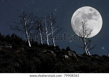 Halloween landscape background with full moon and naked trees - photo composition