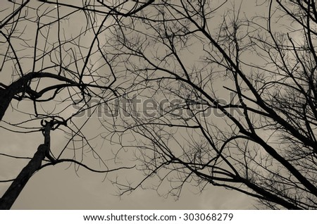 Halloween night sky vintage background Twigs