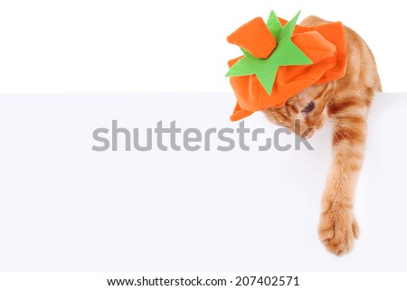 Halloween or Thanksgiving cat wearing pumpkin costume and holding sign or banner on white - stock photo