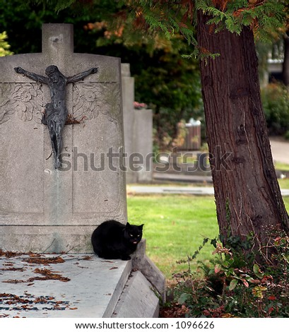 Halloween photo for superstitious people : a black cat in a cemetery - stock photo