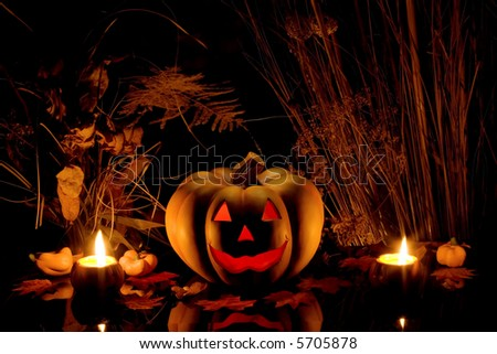 Halloween pumpkin and dry plants on black background. - stock photo