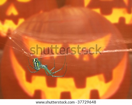Halloween Pumpkin and Spider - stock photo