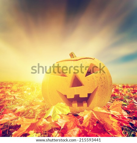 Halloween pumpkin in fall, autumn leaves. Hand carved jack o'lantern - stock photo