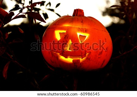 Halloween pumpkin in the forest of bushes - stock photo