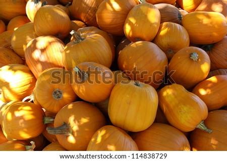 Halloween Pumpkin Pile - stock photo