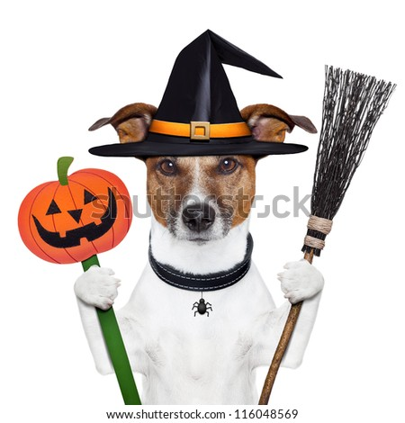 halloween pumpkin witch dog with a broom - stock photo