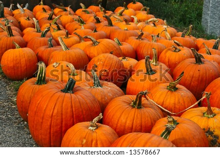 halloween pumpkins for sale - stock photo