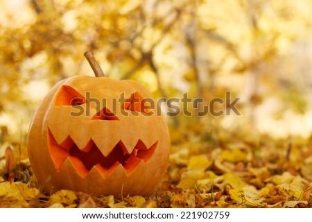 Halloween pumpkins in autumn forest - stock photo