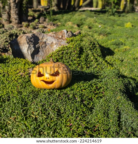 Halloween scary pumpkin jack-o-lantern with a smile in green grass and blurred background - stock photo