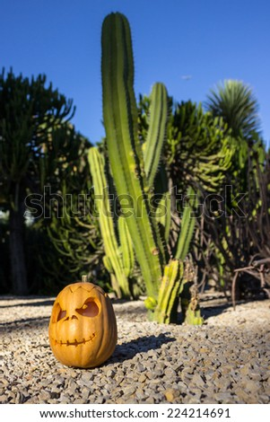 Halloween scary pumpkin jack-o-lantern with a smile on front the blurred cactus background - stock photo