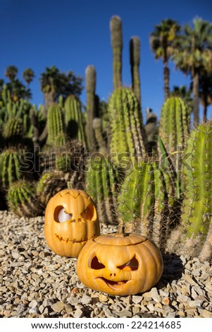 Halloween scary pumpkins jack-o-lantern with a smile on front the blurred cactus background - stock photo