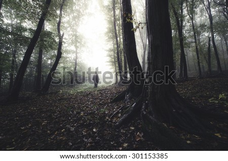 halloween scene with spooky silhouette in dark forest - stock photo