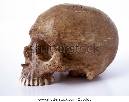 Halloween Skull without jaw. Path included in file. - stock photo