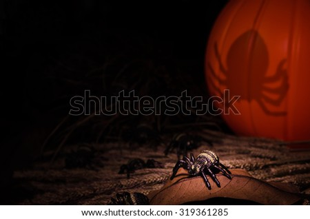 Halloween Spider and Pumpkin in the Scary Dark Night Scene - stock photo