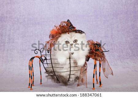 Halloween theme kitten wearing witch hat sitting inside spider shape basket with ornate bow on light purple lilac background - stock photo
