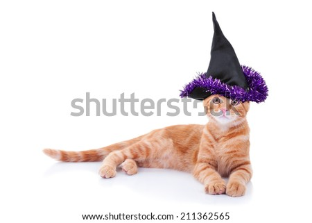 Halloween witch cat in costume isolated on white with copy space - stock photo