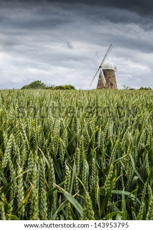 Halnaker Windmill, near Chichester,West Sussex, UK, across a field of unripe wheat on a stormy day - stock photo