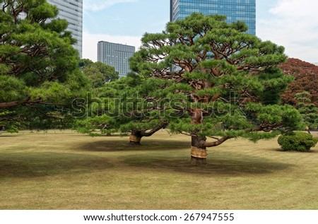 Hama-rikyu Japanese Garden, an oasis of peace in the bustling central Tokyo, Japan  - stock photo