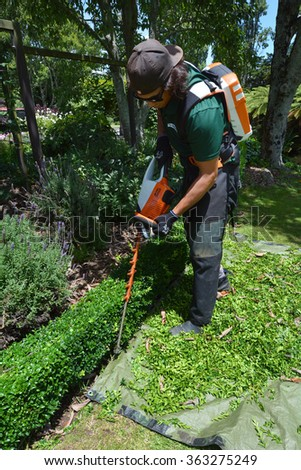 HAMILTON, NZL - JAN 15 2016: Gardener trimming plants in a garden with a trimmer.Forest gardening, a forest-based food production system, is the world's oldest form of gardening.