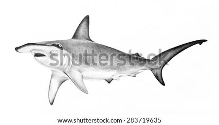 hammerhead shark illustration. hand drawn sketch of hammerhead shark swimming. Dangerous scary animal wildlife drawing. Powerful fierce symbol concept. Shark isolated on white background. - stock photo