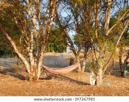 Hammock on the backyard in evening - stock photo