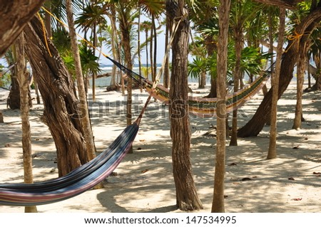 Hammocks slung between trees on Little French Key, Roatan, Honduras