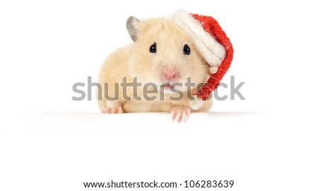 Hamster advertising your product - stock photo
