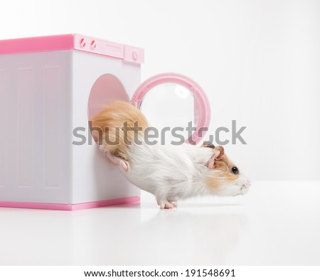 Hamster. Funny hamster getting out from washer - stock photo