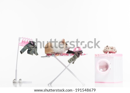 Hamster. Funny hamster ironing clothing - stock photo