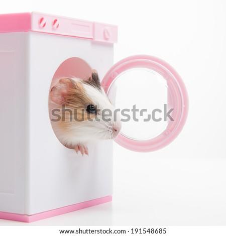 Hamster. Funny hamster sitting in washer - stock photo
