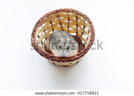 hamster in a basket - stock photo