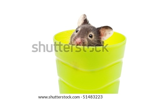 hamster in a cup - stock photo