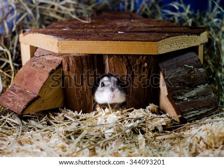 Hamster in a House - stock photo