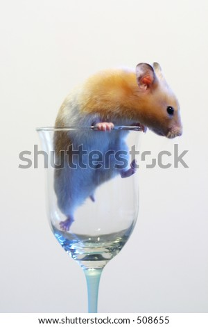 Hamster in a wine glass - stock photo