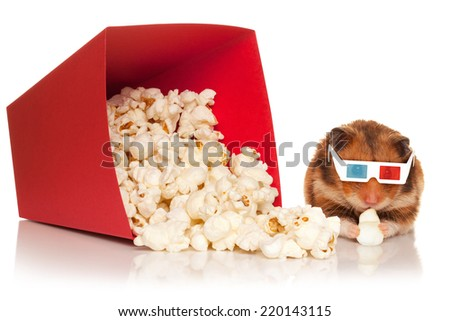 Hamster in 3d glasses chewing popcorn next to the red bucket, isolated on the white background. - stock photo