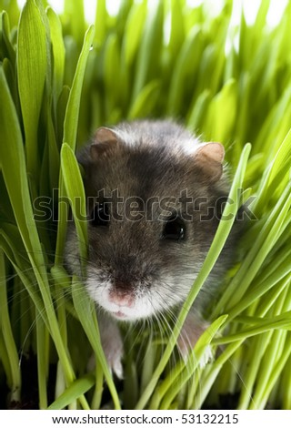 Hamster in grass - stock photo