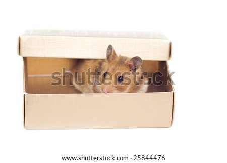 hamster in the box