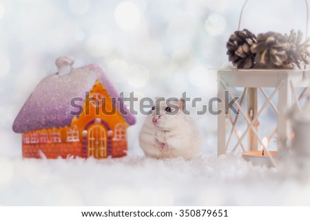 Hamster is in the Christmas decorations - stock photo