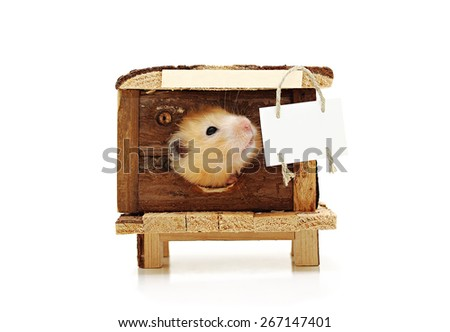 Hamster looks out the window of the house. At home hangs a plaque for ads. Isolated on white background. - stock photo