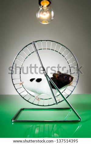 Hamster on the wheel - stock photo