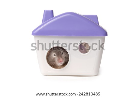 Hamster sits in the lodge. Isolated on the white background  - stock photo