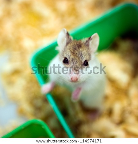hamster sitting in a wooden house - stock photo