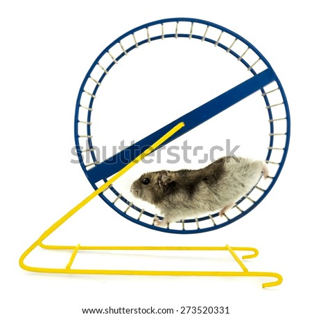 Hamster, wheel, white. - stock photo