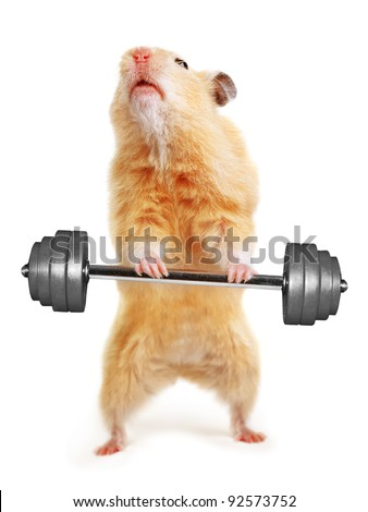 Hamster with bar isolated on white - stock photo