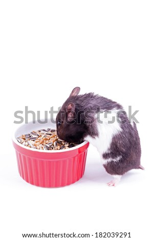 Hamster with grain bowl - stock photo